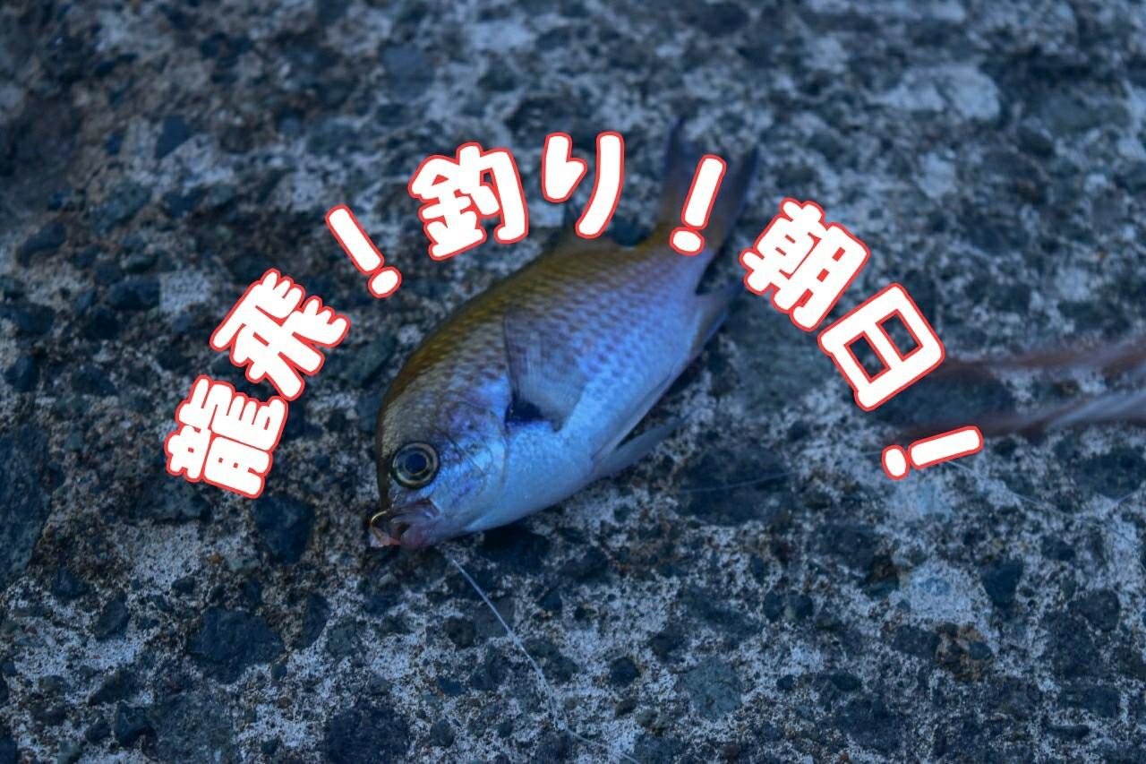 龍飛!釣り!朝日!