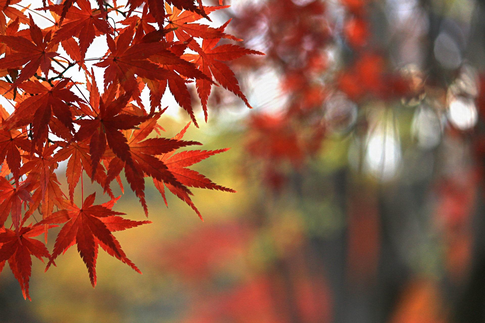 9月23日は秋分の日です